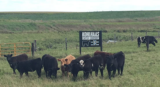 Kohlhaas Cattle Co. - A quality Show Cattle Program in Lu Verne, Iowa